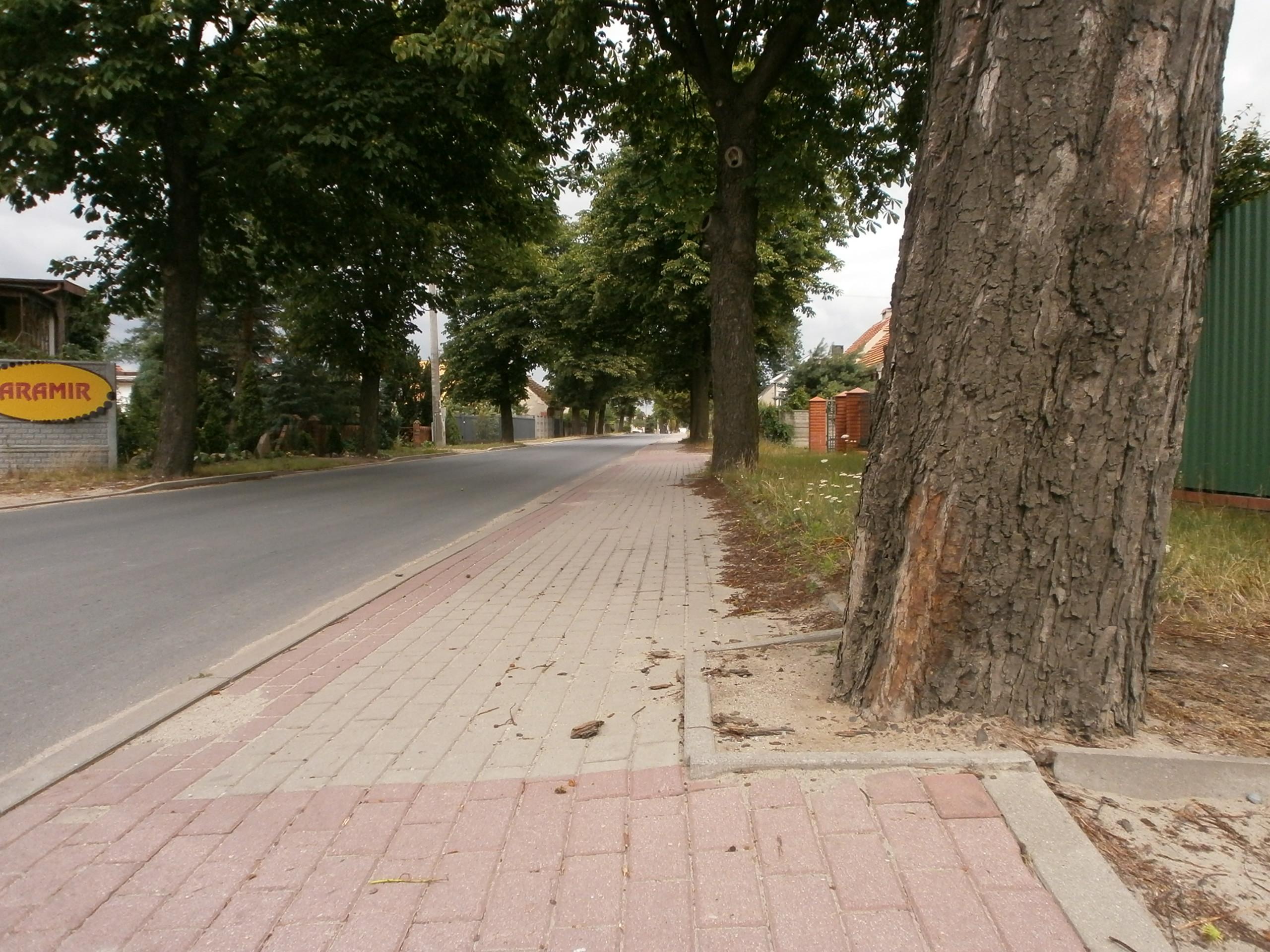 Krawężniki wokół drzew